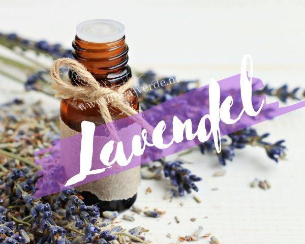 Lavendel ws Lv